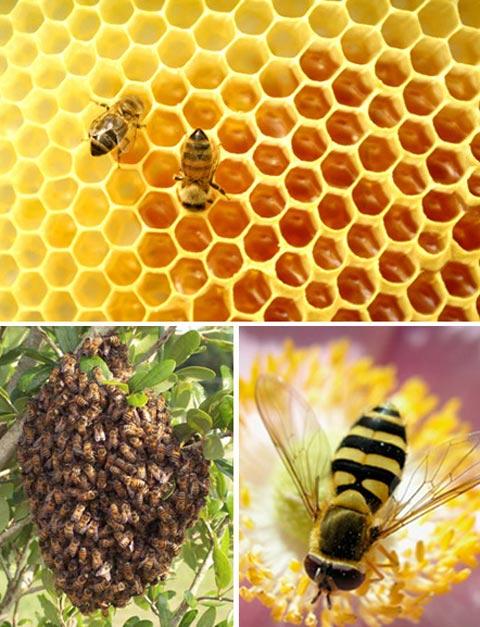kien truc su loai vat tren truyen hình cap ong
